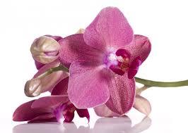 foto 14 orchidee